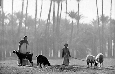Egypt 1964 - Travelling in the Temples Valley.